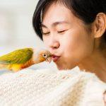 """""""為什麼鸚鵡會說話""""淺談訓練鸚鵡說話技巧"""