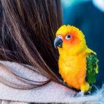 鸚鵡一直打噴嚏是鸚鵡感冒了嗎讓翔帥寵物生活館告訴您
