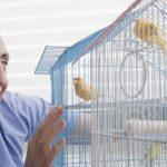 帶鸚鵡回家需要準備哪些鸚鵡物品