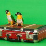 關於鸚鵡的玩具選用-翔帥寵物生活館一一告訴您