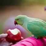 炎熱夏天養鸚鵡需要謹慎的有以下幾點注意事項