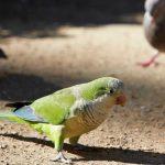 如何讓和尚鸚鵡自己玩,不要讓它變得無聊