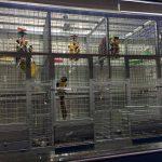 怎麼來選擇合適的鸚鵡籠,鸚鵡籠子購買需要注意哪些事情?