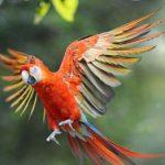 三種鸚鵡最適合新手飼養-養鸚鵡準備事項大公開