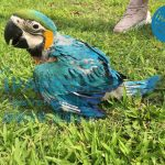 鸚鵡行為與服從-該如何正確的飼養觀念分享