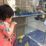 為什麼我的鳥咬我?改善鸚鵡咬人的訓練方法