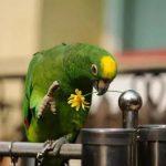 鸚鵡的7種重要疾病要謹慎預防