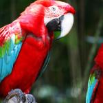 什麼是鸚鵡熱?讓翔帥寵物生活館告訴您