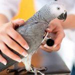 翔帥寵物生活館分享如何判斷鸚鵡的健康狀況