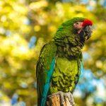 如何跟小鸚鵡培養感情讓翔帥寵物生活館告訴您