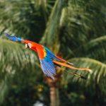 世界上最聰明的5大鸚鵡介紹