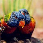 教你家鸚鵡說話的幾個建議,學會後分分鐘教會你的鸚鵡說話