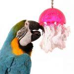 為什麼鸚鵡玩具對鸚鵡來說如此重要
