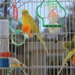 如何訓練鸚鵡進行如廁?讓翔帥寵物生活館告訴您