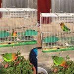 """鸚鵡想去籠子外面玩,接下來的舉動差點""""殺""""死自己,網友直說傻"""