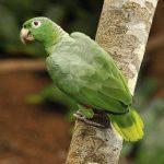 常見的不同鸚鵡體型規格,您了解嗎?這邊讓翔帥寵物生活館告訴您