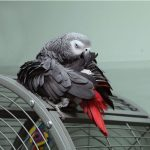 鸚鵡籠子選擇細節大分析讓您從此不再為鸚鵡安全煩惱