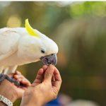 鸚鵡不能吃的食物有哪些呢?