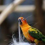 鸚鵡究竟在想什麼?看了這個就能從動作上了解鸚鵡的心情!