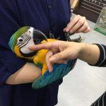 關於鸚鵡社交的重要性,加速您鸚鵡親近的關鍵因素