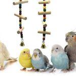 變異的鸚鵡品種是屬於正常的鸚鵡嗎?