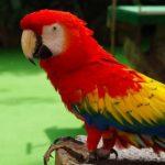 怕冷的鸚鵡冬天要如何幫他們保溫呢|翔帥寵物生活館報您知