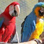 鸚鵡尖叫的原因 | 減少鸚鵡尖叫的方法分享