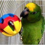 翔帥寵物知識小講堂,如何給鸚鵡提供玩具